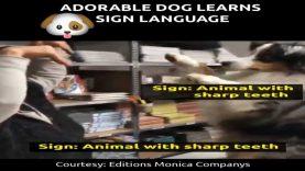 Adorable Dog Learns Sign Language
