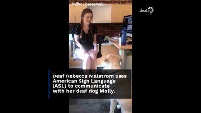 Deaf Girl's American Sign Language (ASL) To Teach Her Deaf Dog Tricks