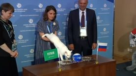 A Deaf Hermitage Cat To Become Oracle For 2018 FIFA World Cup In Russia