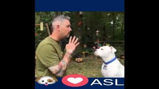 Dog Loves American Sign Language (ASL)
