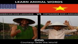 Learn Animal Words in American Sign Language VS Vietnamese Sign Language