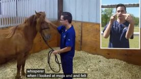 Meet The Deaf Real-Life Horse Whisperer Joseph Lockwood