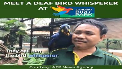 Meet Singapore's Deaf Bird Whisperer At Jurong Bird Park