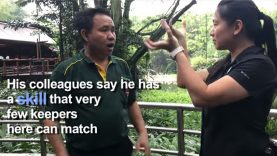 Singapore's Deaf Bird Whisperer at Jurong Bird Park