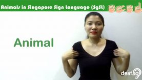 Singapore Sign Language (SgSL) Lesson: Animals