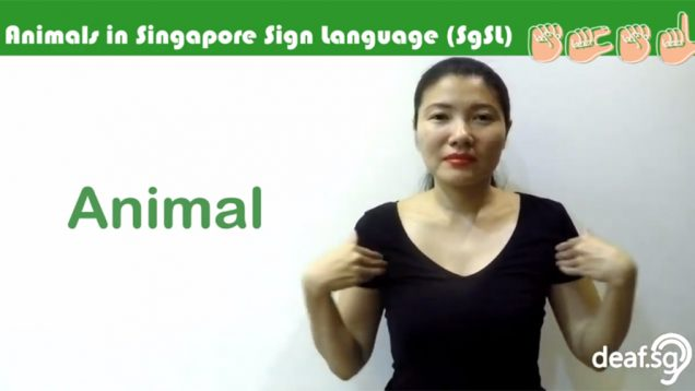 Singapore Sign Language (SgSL) Lesson: Animals