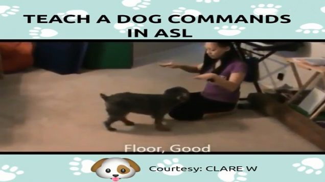 Teach A Dog Commands in American Sign Language (ASL)